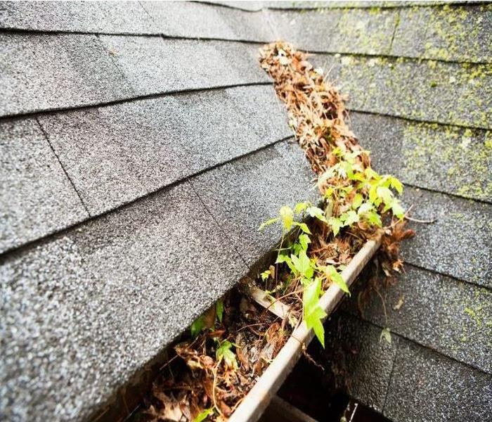 Gutter filled with leaves and debris